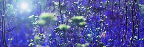 Blue wild flowers royalty free stock photos