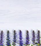 Blue wild flowers on white wood background Royalty Free Stock Image