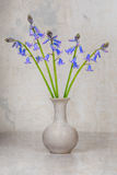 Blue wild hyacinths in a vase Stock Photos