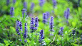 Blue wild nature flowers stock footage