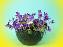 Blue wild pansy Royalty Free Stock Photo