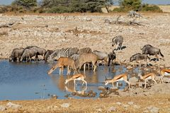 Wildlife at an Etosha waterhole Stock Photo