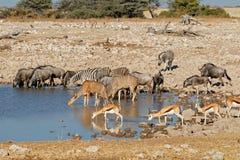 Wildlife at an Etosha waterhole stock photo