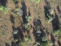 Blue Wildebeests in bush from above Royalty Free Stock Images