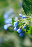 Blue Wildflower Stock Photography