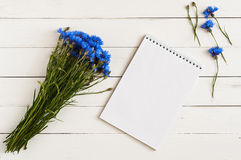 Blue wildflowers Royalty Free Stock Image