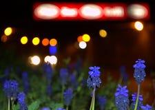 Blue wildflowers bokeh background Royalty Free Stock Photo