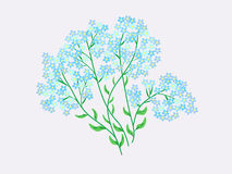 Blue wildflowers flowers forget-me-nots Royalty Free Stock Images