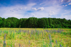 Blue Wildflowers On A Background Of Forest Royalty Free Stock Photos