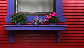Blue window frame on red weatherboard house. Close up of blue window frame with decorative flowers on red weatherboard house Royalty Free Stock Photo