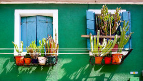 Blue window on green wall with cactus Stock Images