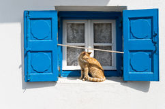 Blue window and red cat Royalty Free Stock Image