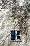Blue Windows and Tree Stock Photos
