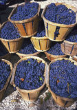 Blue wine grapes in wicker baskets Royalty Free Stock Image