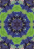 Blue winegrapes mandala Royalty Free Stock Photography