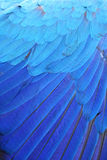 Blue wing feathers of Macaw. Royalty Free Stock Photos