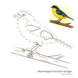 Blue winged mountain tanager draw vector Royalty Free Stock Image