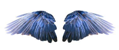 Blue wings. On a white background Royalty Free Stock Photo