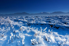 Blue winter. Beautiful blue winter day - Slovakia, Nizke Tatry Royalty Free Stock Image