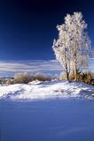 Blue winter day Royalty Free Stock Photo
