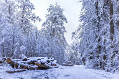 Blue Winter Forest Royalty Free Stock Images