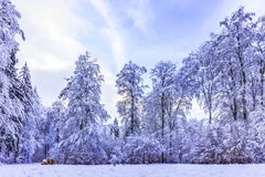 Blue Winter Forest Stock Photography