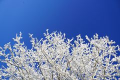 Blue, Winter, Frost, Sky Royalty Free Stock Image