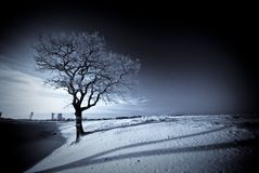 Blue winter night Stock Photography
