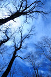Blue Winter Sky Stock Photography