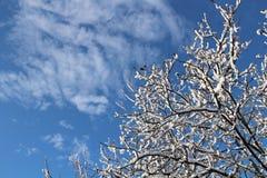 The blue winter sky Stock Photos