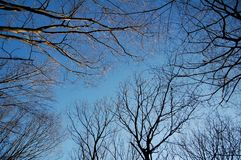 Blue Winter Sky and Tree Branches. Blue sky in winter and bottom-up view of trees Stock Images