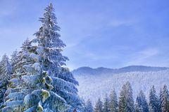 Blue winter wonderland with snowy trees and mountains and clear sky Stock Photo