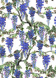 Blue wisteria tree Royalty Free Stock Image