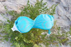 Blue women`s bra lying on green bush at beach. Rest naked, nudism. Blue women`s bra lying on green bush at the beach. Rest naked, nudism Stock Image
