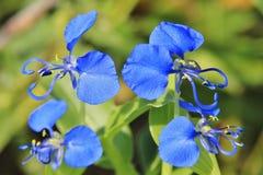 Blue Wonder - Wild Flower Background from Nature Stock Photos