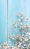 Blue wood background and small flowers Royalty Free Stock Images