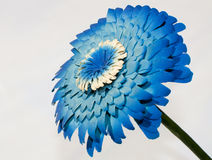 Blue wood flower. On white background Royalty Free Stock Photos