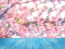 Wood table top over pink cherry blossoms flower in full bloom. Blue wood table top over pink cherry blossoms flower in full bloom, spring season. Montage style Royalty Free Stock Images
