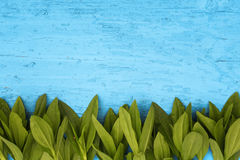 Blue wooden background with frame of fresh green leaves Stock Photos