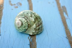 Blue wooden beach floor green sea shell Stock Photography