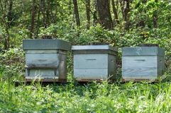 blue wooden beehives in a green meadow at spring Royalty Free Stock Photography