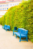 Blue wooden benches in park Royalty Free Stock Image