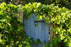 Blue wooden door in autum with grapes. Blue wooden door with a heart in autum with grapes Stock Photo
