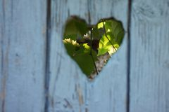 Blue wooden door in autum with grapes. Blue wooden heart in autumn Stock Image