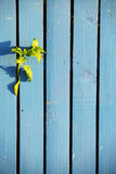 Blue wooden fence Stock Image
