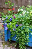 Blue wooden flower pot with wild flowers Stock Image