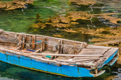 Blue wooden row boat floating on water. Blue wooden row boat floating on a sea of greenish colored water with brown plants floating on the surface Royalty Free Stock Photography