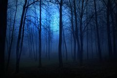 Blue Woods. Foggy Woods with a deep blue filter royalty free stock images
