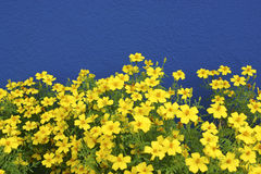 Blue a yellow Royalty Free Stock Image