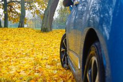 Blue and yellow autumn. When parking my car i saw this beautiful contrast between the car and the leaves Royalty Free Stock Photography